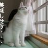 猫と熱帯魚のお留守番