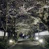 無量寿院の桜のトンネル