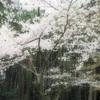 19.京都へ行きたい時に私が読む本「細雪」