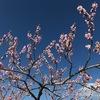 【やってみた】桃の花摘み