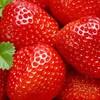 イチゴ食べ放題🍓に行って来ました。イチゴ🍓って全部で何種類?