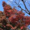 中央地区の紅葉・黄葉(2020/11/19)