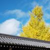 京都紅葉狩りの旅 9