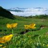 植物と友達になろう! VOL.07 「シナノキンバイ・ミヤマキンポウゲ・ミヤマキンバイ・ミヤマダイコンソウ」
