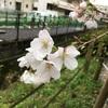 【春は目の前🌸】