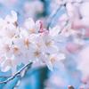 春分の日。新しいスタート共に、楽しい時間。