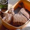 猫さんを迎える準備 キャリー編