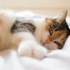 更年期の眠い原因と解消法。40代の眠気対策