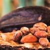 カカオ豆の産地、品種、特徴、ランキング|チョコレートの味の違いを知るおすすめブランドも