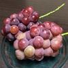ブドウの季節は続く