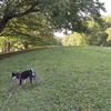 野川公園、暑かった