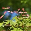 奈良公園 初夏の息吹/赤や黄の小さな実がちらほら。眩しいほどの新緑の季節になりました。