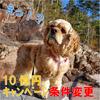 『au PAY』毎週10億円キャンペーン!条件変更!!