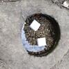 レタスの水耕栽培2