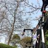 ライド記録(2019/03/29)桜