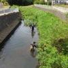 2017年2回目の和泉川掃除を行いました。