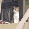 9月25日 足立区本木から千住東の猫さま とその情景