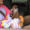 「ふーっ、助かりました」ルイジアナの洪水で救われた子鹿が見せる表情がカワイすぎる