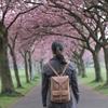 【スコットランドでも桜は見られます!】エディンバラ メドーズで桜見物