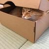 箱に食べられた猫
