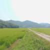 夏の田んぼ道 ~姫路市飾東町~