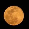 4月の満月、「ピンクムーン」の「桃色」を撮影したと喜んだが!(>_<)
