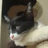 今日の黒猫モモ&白黒猫ナナの動画ー505