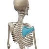 【ベンチプレス】インナーマッスルが原因!肩の痛み・負担が減る方法!