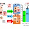 皮膚腫瘍の悪性を判定できるAIを開発
