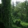 ホノルルから片道20分、2.5ドルで行ける熱帯雨林!マノアの滝トレッキングを楽しんできました