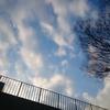 春は羊の雲を産む