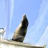 サンシャイン水族館 空飛ぶペンギン 東京旅行8日目part1