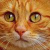 【前兆】大坂北部地震の前のネコたちの異変とスズさんのキンギョ・ドジョウの前兆