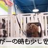 2021.2.15 【愛犬の防災トレーニング】 クレートトレーニングが出来ていると万が一の時も少し安心です。 Uno1ワンチャンネル宇野樹より