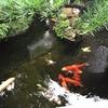 京都・西陣 天喜の京料理と天ぷら