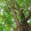 赤ちゃんの記念樹