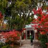 赤山禅院(せきざんぜんいん)