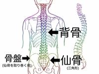 体の基本中の基本 Part1<乳がんブログVol.349>