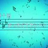 【2015年舞台探訪報告】TVアニメ「響け!ユーフォニアム」第十回・まっすぐトランペット 六地蔵・黄檗舞台探訪【2015年6月11日】