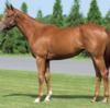 シルク15年産一口初心者全馬評価31 セレブレイトコールの15