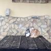 シチリアから、シラクーザ。猫との遭遇。