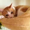 ペットの急な病気やケガの対応はどうする?病院は2つ把握しておこう