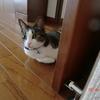 台風は逸れたおネコさま。