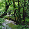 京都北山 由良川源流へテント泊の山旅 2
