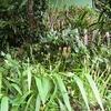 松戸の家の彼岸花