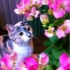 今週のお題「ねこ」:今日は特別な日だから、 飼い猫を自慢しようと思う(笑)