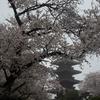 今年の桜で、勝手に独り写真コンテスト!ベスト3は?