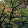 今年の京都は少し紅葉が遅めなのと色が鮮やかでは無い気がします。