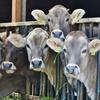 『地球温暖化』と『牛』