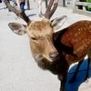 奈良公園の鹿はせんべい買った途端に食いついてくる。東大寺はほんとうに大きく、私たち人間はまるで小人のようだった。